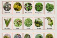 cara kerja pestisida nabati