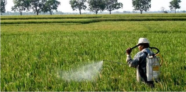 kekurangan pestisida nabati