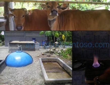 Biogass2 Analisis Pendapatan Terhadap Karakteristik Usahatani Integrasi Tanaman – Ternak sapi pakan ternak kakao integrasi biogas