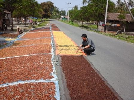20151030_103958 Peranan Penyuluh Terhadap Preferensi Teknologi dan Persepsi Petani Cengkeh di Maluku Tengah rank spearman peranan penyuluh komunikasi