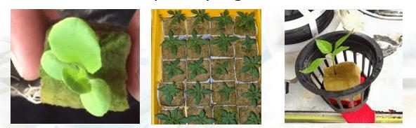 05 Hidroponik dan Vertiminaponik dalam Perkembangan Pertanian Modern vertiminaponik pekarangan hidroponik akuaponik