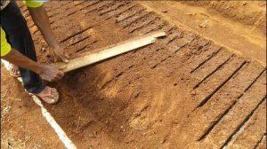 05-300x168 Cara menyemai benih bawang merah persemaian pekarangan bawang merah