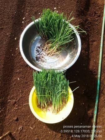 09 Alat yang Memudahkan Proses Penanaman Bawang Merah TSS pekarangan fungisida bawang merah