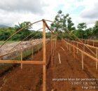 pembuatan-naungan-140x130 Meraup Keuntungan Bawang Merah di Musim Hujan pekarangan naungan bawang merah