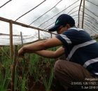 IMG_20180605_092207-140x130 Posisi Maluku Dalam Produksi dan Petunjuk Teknis Budidaya Bawang Merah uji varietas penawaran dan permintaan maluku bawang merah