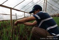 penelitian bawang merah 2018