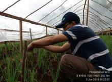 IMG_20180605_092207-220x162 Posisi Maluku Dalam Produksi dan Petunjuk Teknis Budidaya Bawang Merah uji varietas penawaran dan permintaan maluku bawang merah