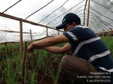 IMG_20180605_092207 Posisi Maluku Dalam Produksi dan Petunjuk Teknis Budidaya Bawang Merah uji varietas penawaran dan permintaan maluku bawang merah