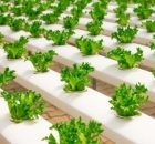 pengusaha-pertanian-perkotaan-140x130 Menjadi pengusaha pertanian di pusat kota usahatani pertanian modern