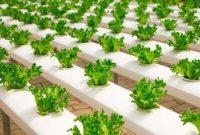 bisnis pertanian yang menjanjikan