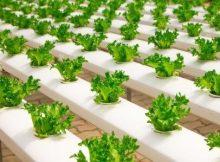 pengusaha-pertanian-perkotaan-220x162 Menjadi pengusaha pertanian di pusat kota usahatani pertanian modern