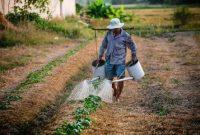 Trik-menghitung-HOK-200x135 Trik Menghitung HOK Usahatani usahatani pertanian hortikultura hok