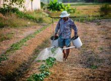 Trik-menghitung-HOK-220x162 Trik Menghitung HOK Usahatani usahatani pertanian hortikultura hok